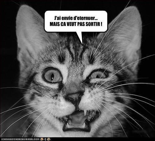 La mélancolie, c'est un chat perdu ...