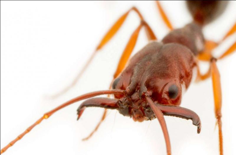 Les fourmis sont des insectes.
