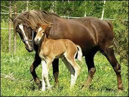 Quelle est la femelle du cheval ?