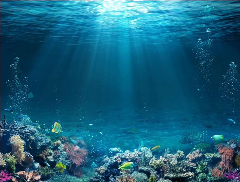 Qu'aura-t-on bientôt pour communiquer sous l'eau ?