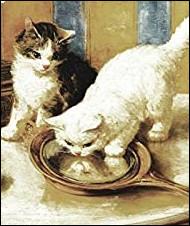 Qui est l'auteur de ''Vies de deux chattes'' ?