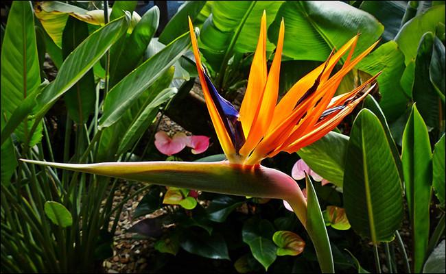 Quel est le nom de cette fleur vivace exotique à feuillage persistant ?