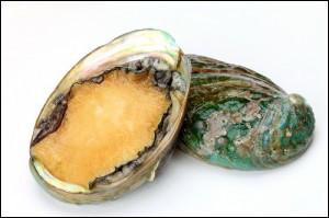 Quel est le nom de ce mollusque, réputé pour sa chair, mais surtout pour la nacre irisée de sa coquille unique ?