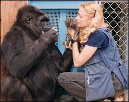 Quel animal était Koko, connu pour être capable de communiquer en langue des signes ?