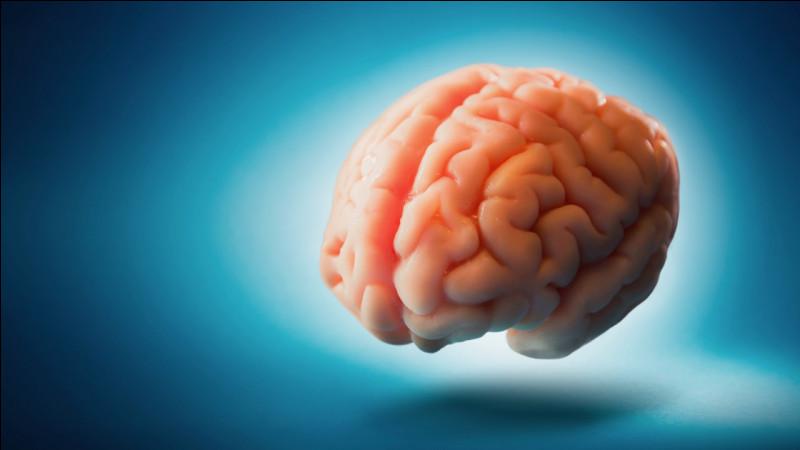 Selon des études scientifiques les humains n'utilisent que 10% de leur cerveau, plein de produits existent sur internet pour combler les 90% de notre cerveau.