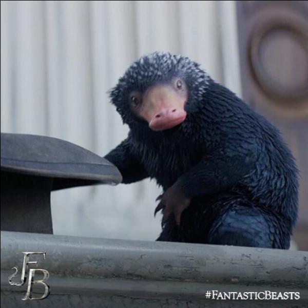 Comment s'appelle cette petite créature noire voleuse que l'on voit dans ''Les Animaux fantastiques'' ?