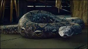 Comment s'appelle ce serpent ?