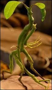 Quel est le nom de cette petite créature verte ?