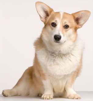 Les races de chiens en W et Y