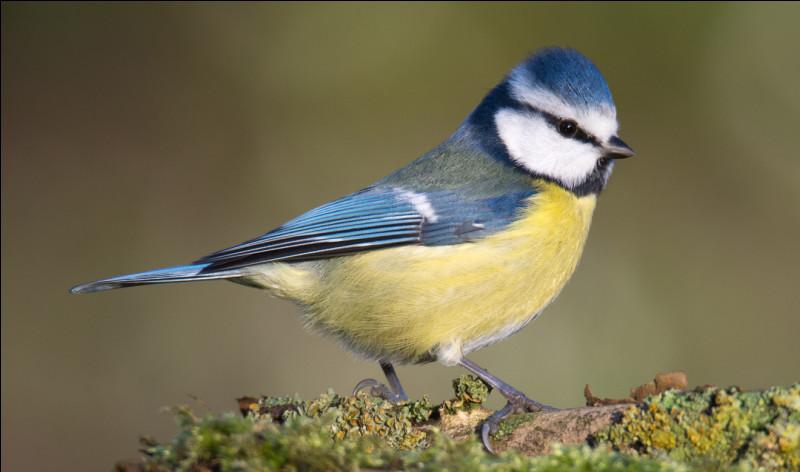 Regardez bien cet oiseau. Quel est son nom ?