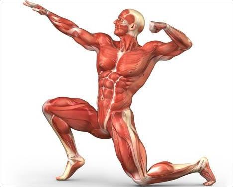 Dans quelle partie du corps peut-on trouver le liquide sinovial ?
