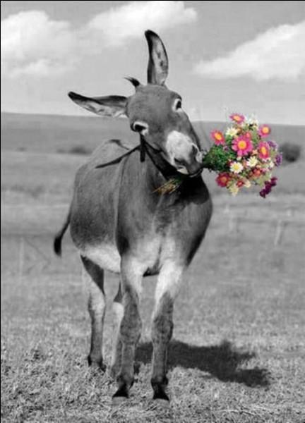"""De qui est la version la plus célèbre du conte intitulé """"Peau d'âne"""" ?"""