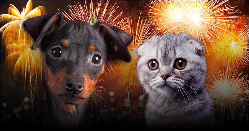 Je persiste en citant Moquette (le roi des animaux) inscrit sur le site le 3 février 2011. Il va nous dire ce que signifie une moquette dans l'univers animalier !