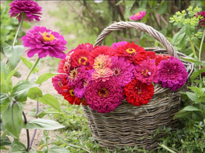 On admire les fleurs que ML, Joc, Cactus et Pth ont apportées à l'occasion de cette fête !