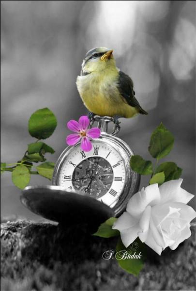 """Dans quelle fable de La Fontaine, lit-on """"Sur les ailes du temps, la tristesse s'envole"""" ?"""