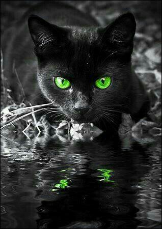 """Qui est l'auteur de """"Blues pour un chat noir"""" (auteur aussi de """"L'Herbe rouge"""") ?"""
