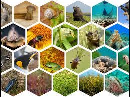 Les sciences participatives sur la biodiversité permettent à tous de :