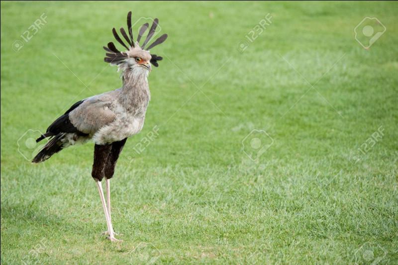 D'après vous, à quel continent appartient cet oiseau ?