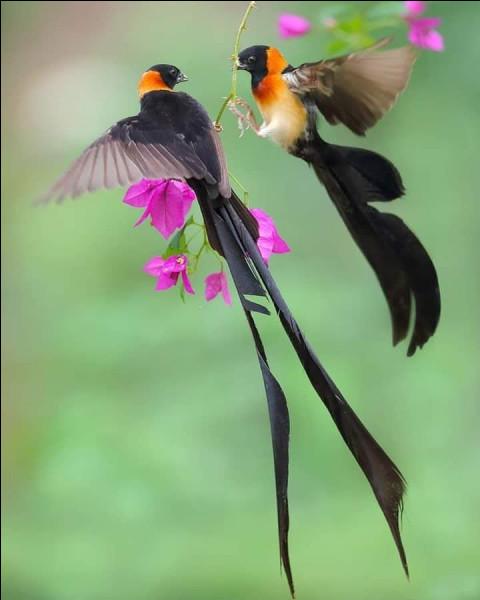 Ce sont certainement les plus beaux oiseaux du monde de par leurs différentes espèces, en tout cas les plus nombreux, pour les voir il vous faudra prendre l'avion et atterrir ...