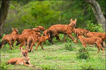 Reconnaître ces animaux, c'est reconnaître le continent !