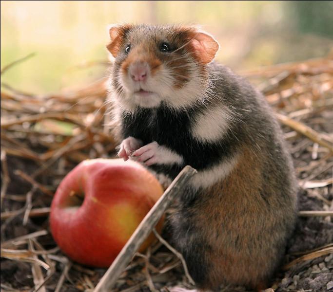 Si vous reconnaissez cet animal, c'est gagné et vous avez droit à toute ma considération !