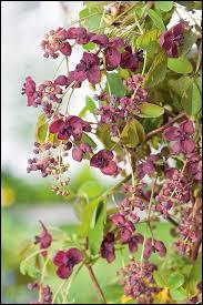 Cochez le nom de cette plante !