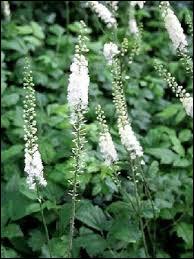 Retrouvez le nom de cette plante !