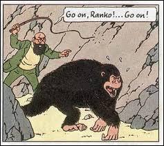 Go comme gorille : dans quel album de Tintin, rencontre-t-on un gorille ?