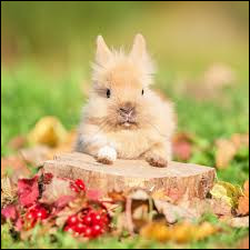 Les lapins sont des mammifères carnivores.