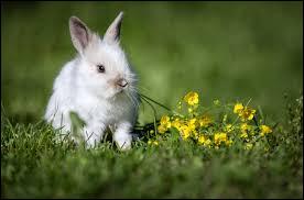 La femelle du lapin s'appelle la lapinelle.