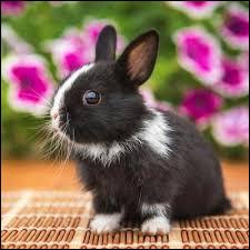 Le lapin n'apprécie pas la solitude.