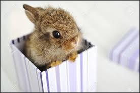 Le petit du lapin est le lapinais.