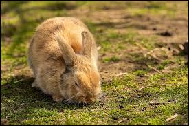 """En cuisine, le lapin est classé comme """"viande rouge""""."""