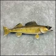 Quel poisson n'a pas d'écailles ?