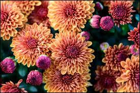 En Chine, cette fleur est symbole de :