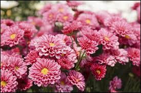 Quelle est sa période de floraison ?