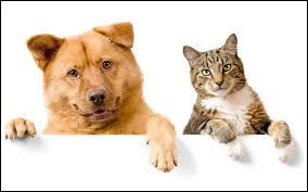"Quel animal fait ""miaou"" ?"