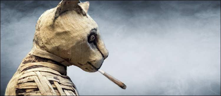 Des tests sur des momies vieilles de plus de 3000 ans se sont avéré positifs au cannabis.