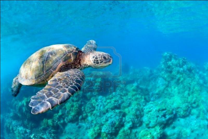 Recife est une ville du Brésil qui a un accès à l'Atlantique.Les récifs coralliens sont des lieux de biodiversité magnifique. Le plus grand se situe en Australie, mais savez-vous sa longueur ? (environ)