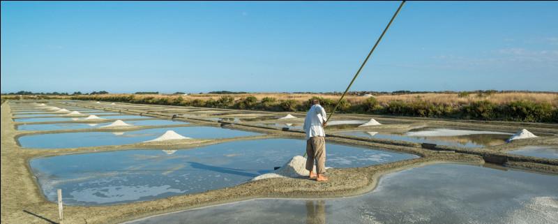 Direction les Pays de la Loire ! Quelle île vendéenne y est réputée pour son sel ?