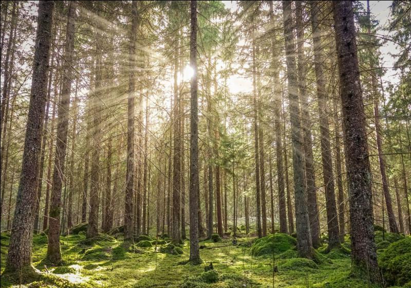 Fais-tu attention à préserver la nature et l'environnement ?