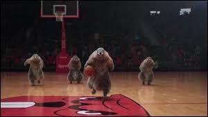 Quel sport pratiquent les marmottes ?