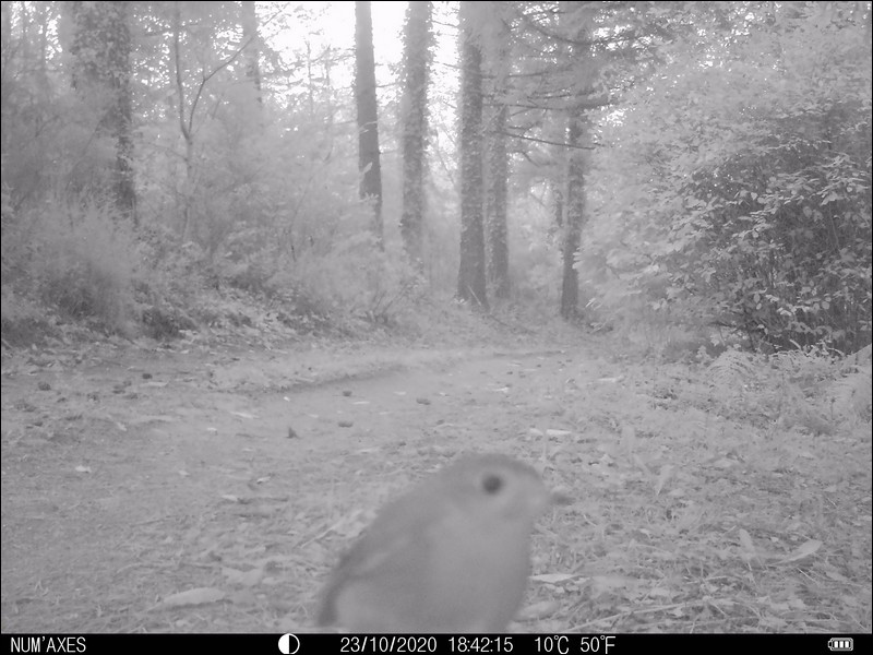 Tarn, octobre 2020. Identifiez cet oiseau !
