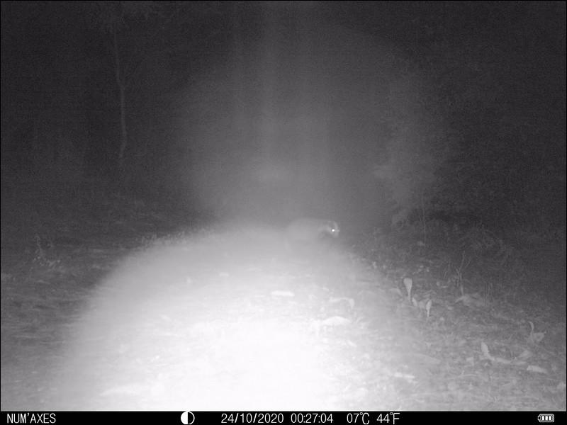 Tarn octobre 2020. Photographié en pleine nuit, qui est-il ?