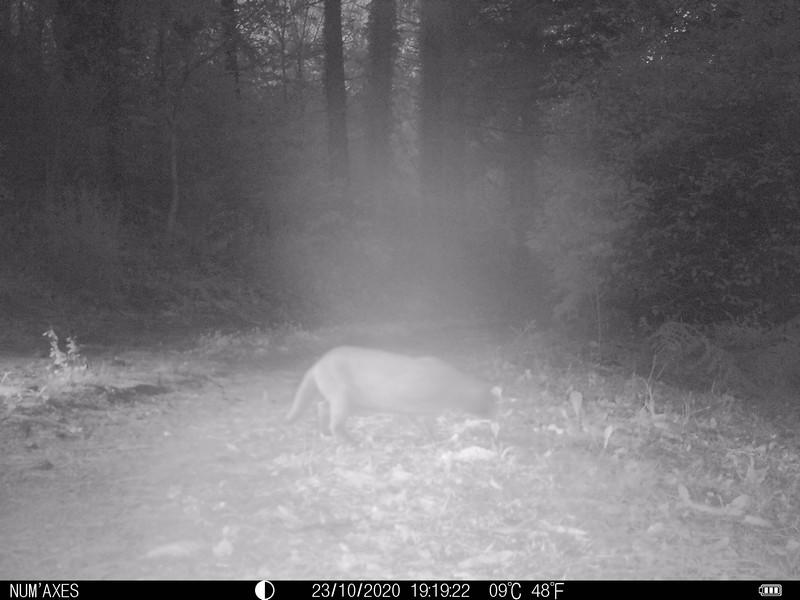 Identifiez l'animal, de jour comme de nuit, et malgré les difficultés