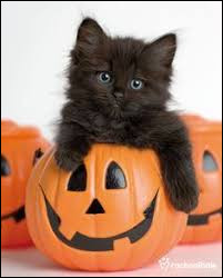 """Comment dit-on """"un chat noir"""" en anglais ?"""
