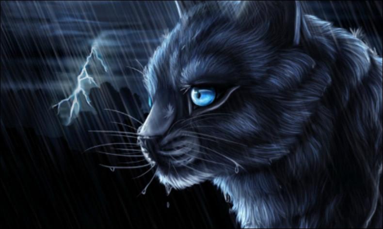 Comment s'appelait Étoile Bleue quand elle était chaton ?