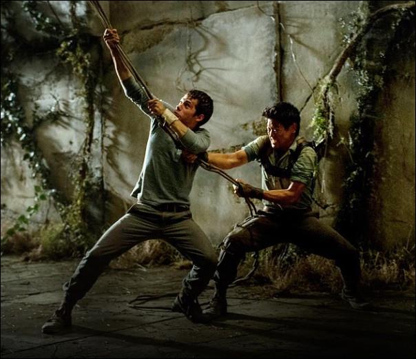 Thomas hisse Alby tout seul en haut du lierre du labyrinthe pour le sauver des Griffeurs.