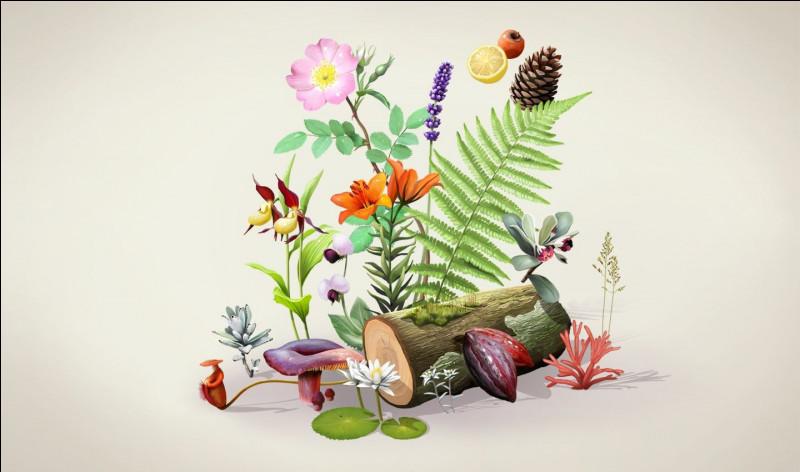 Quelle couleur, un violet vif et rougeâtre, est nommée en honneur d'un botaniste allemand ?