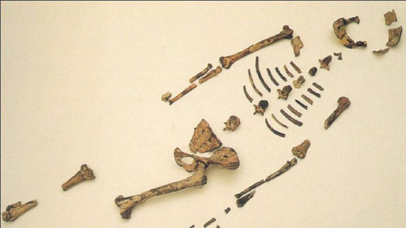 D'où vient le nom de ''Lucy'', australopithèque, découverte en 1974 ?